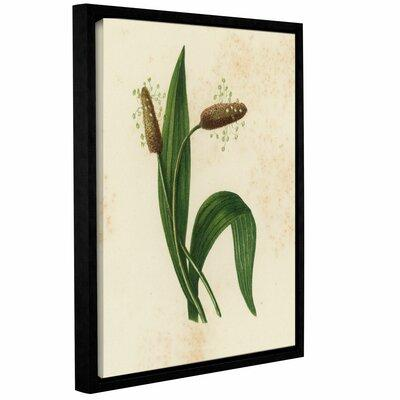 Gracie Oaks 'Ribwort Plantain' Framed Graphic Art GRKS564...