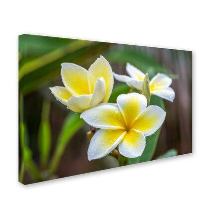 "Trademark Art ""Plumeria in the Rain"" by Pierre Leclerc Ph..."
