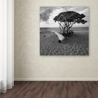 Trademark Art 'Hawaiian Tree' Photographic Print on Wrapp...