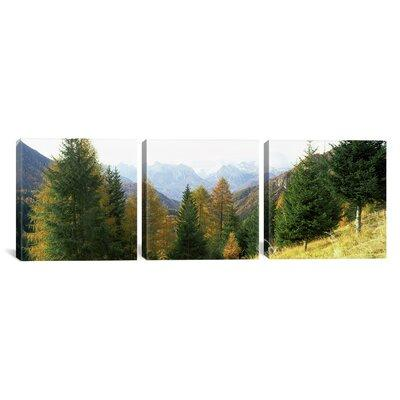 Latitude Run Larch Trees in front of the Dolomites, Italy...