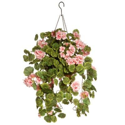 August Grove Hanging Flowering Plant in Basket BF183369