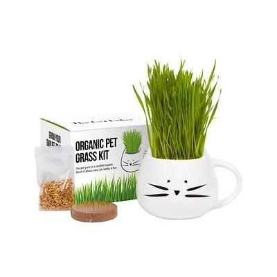 The Cat Ladies Organic Pet Grass Kit with Planter, White